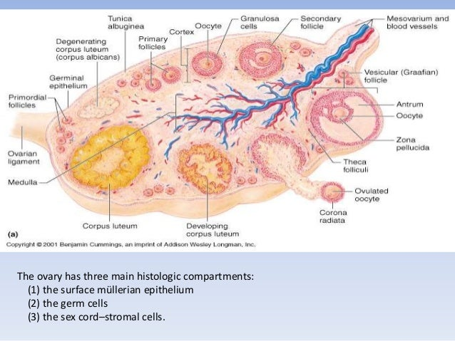 definition of steroid sensitive nephrotic syndrome