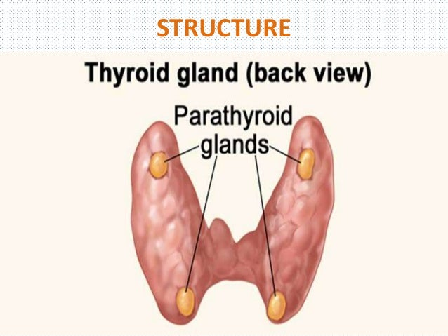Diseases Of The Parathyroid Gland1