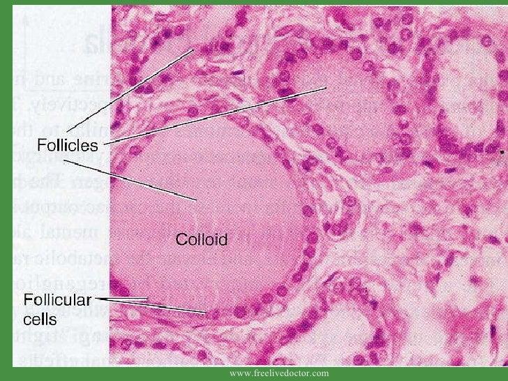 Diseases Of Thyroid Gland