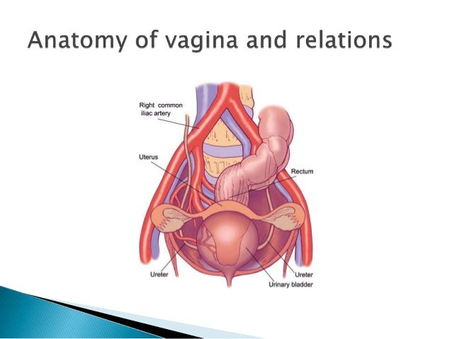 How deep vagina short