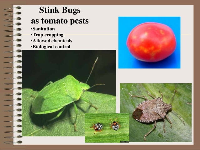Elements of Organic Farming: Pest, Insect, & Disease Management