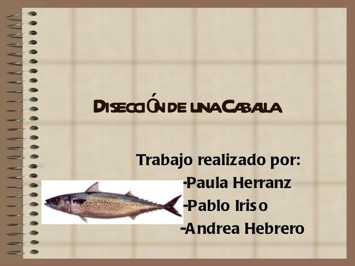 Disecció de unaCa la        n        bal    Trabajo realizado por:         -Paula Herranz          -Pablo Iris o         -...