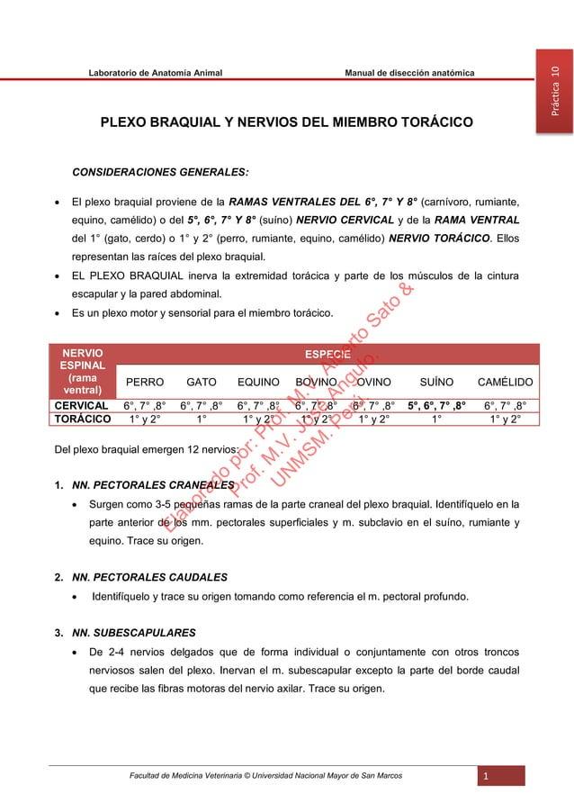 Facultad de Medicina Veterinaria © Universidad Nacional Mayor de San Marcos 1 Laboratorio de Anatomía Animal Manual de dis...