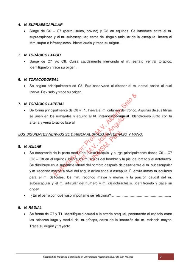 Facultad de Medicina Veterinaria © Universidad Nacional Mayor de San Marcos 2 4. N. SUPRAESCAPULAR  Surge de C6 – C7 (per...