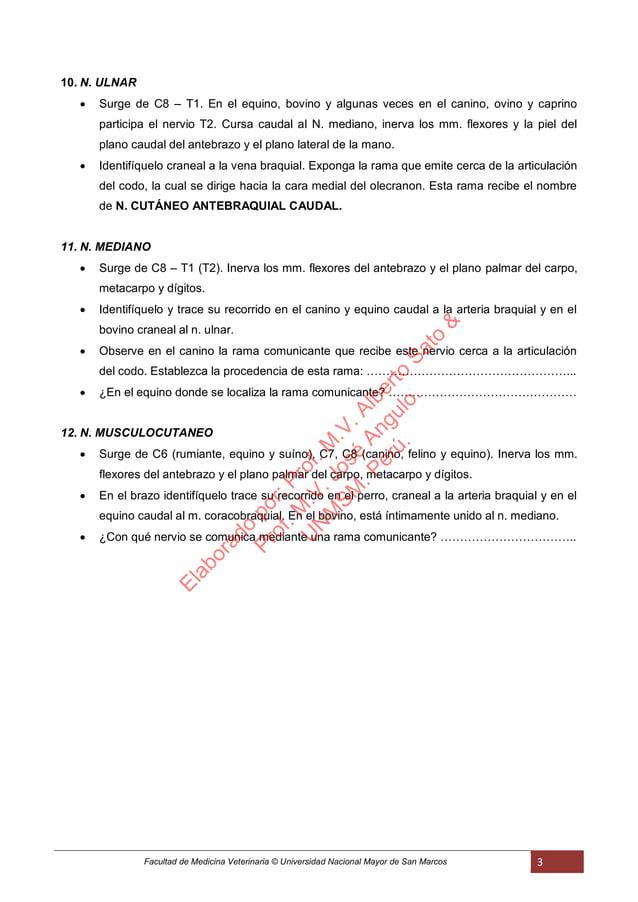 Facultad de Medicina Veterinaria © Universidad Nacional Mayor de San Marcos 3 10. N. ULNAR  Surge de C8 – T1. En el equin...