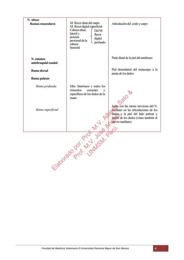Facultad de Medicina Veterinaria © Universidad Nacional Mayor de San Marcos 6 N. ulnar Ramas musculares N. cutaneo antebra...