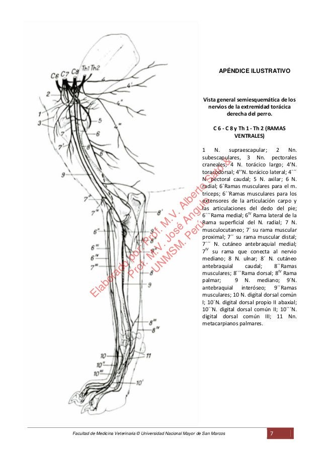 Facultad de Medicina Veterinaria © Universidad Nacional Mayor de San Marcos 7 APÉNDICE ILUSTRATIVO Vista general semiesque...
