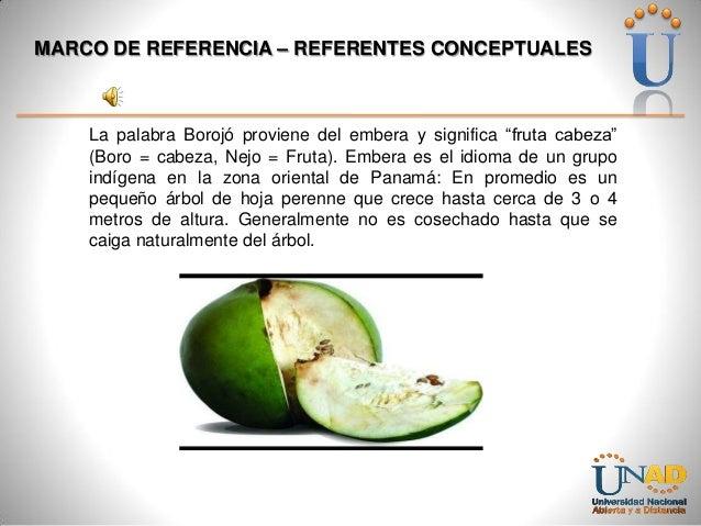 "MARCO DE REFERENCIA – REFERENTES CONCEPTUALES  La palabra Borojó proviene del embera y significa ""fruta cabeza"" (Boro = ca..."