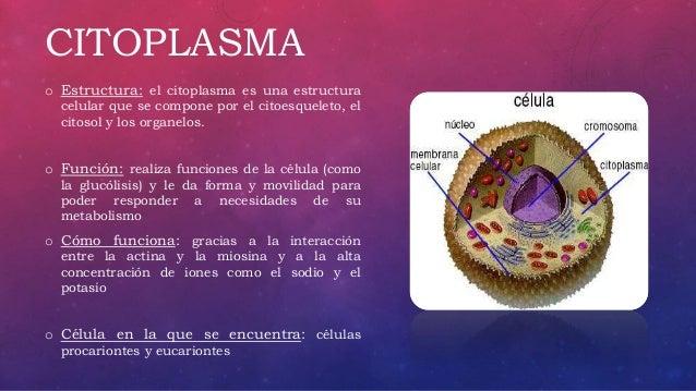 Metabolismo Celular Citoplasma Lisosomas Y Peroxisomas