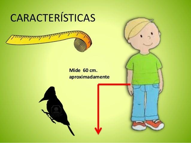Niños Carpintero Pájaro El Carpintero Presentación El Niños Presentación Presentación Pájaro BQdCxosthr