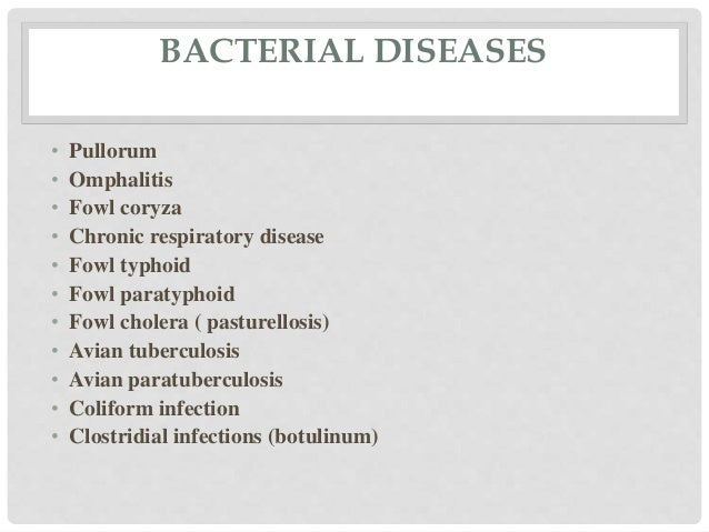Common Poultry diseases and vaccination