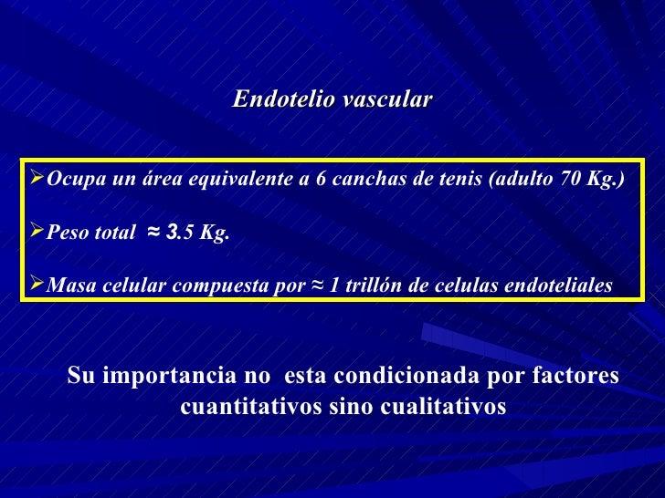 Endotelio vascular <ul><li>Ocupa un área equivalente a 6 canchas de tenis (adulto 70 Kg.) </li></ul><ul><li>Peso total  ≈ ...