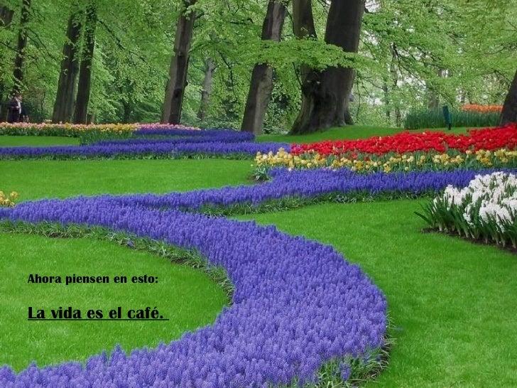 Ahora piensen en esto:La vida es el café.