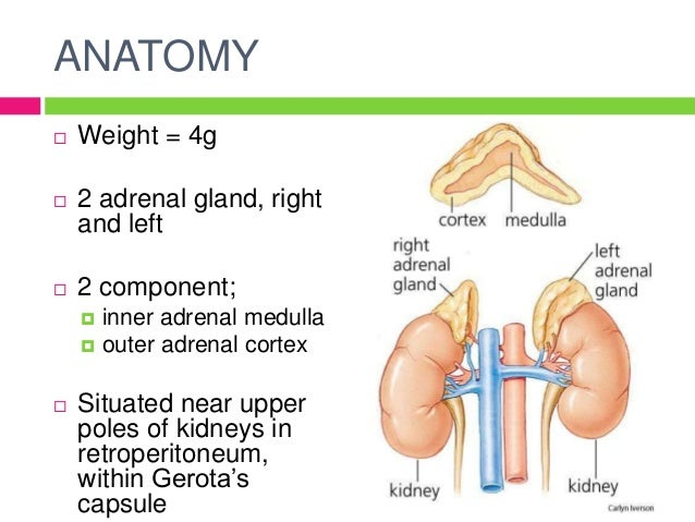 Disorders Of Adrenal Gland