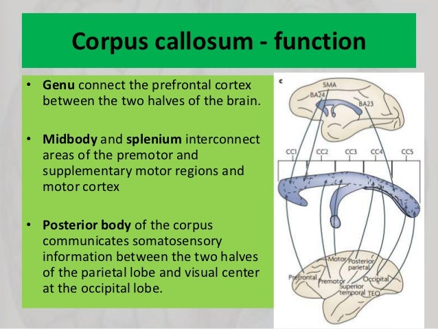 Disorders of corpus callosum