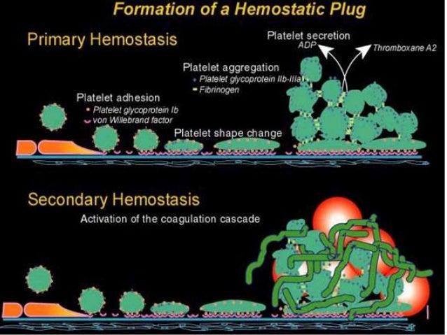 Normal Haemostasis