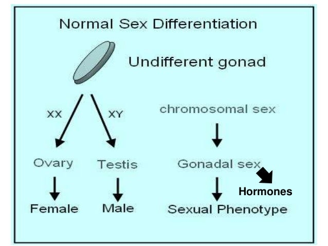 Disorder of sexual differentiation pdf