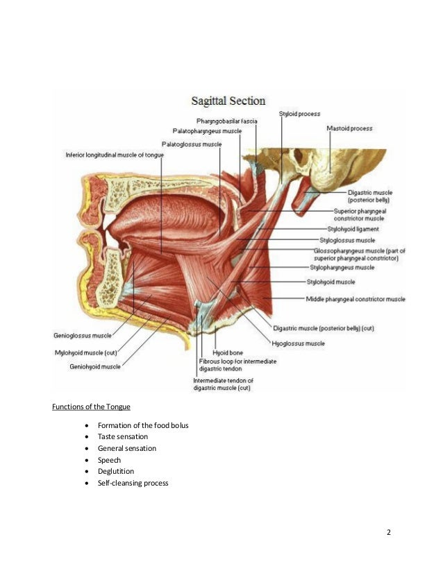 Disorders of the tongue