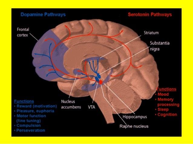 Difficoltà di autoregolazione (V)Difficoltà di autoregolazione (V) Concentrazione ed attenzione sostenutaConcentrazione ed...