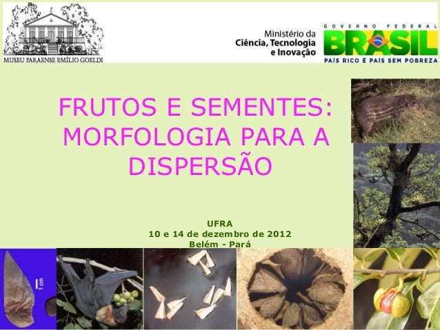 FRUTOS E SEMENTES:MORFOLOGIA PARA A    DISPERSÃO                 UFRA     10 e 14 de dezembro de 2012             Belém - ...