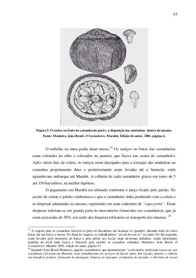 43 Figura 5: O ouriço ou fruto da castanha-do-pará e a disposição das amêndoas dentro do mesmo. Fonte: Monteiro, João Bras...