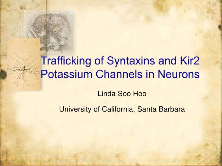 Trafficking of Syntaxins and Kir2 Potassium Channels in Neurons<br />Linda SooHoo<br />University of California, Santa Bar...