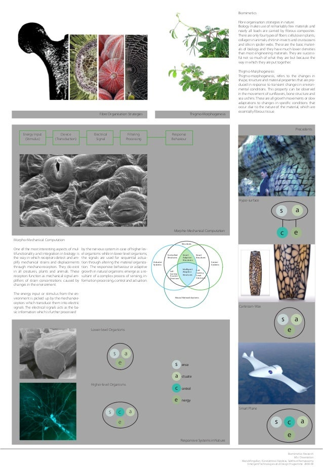 Biomimetics Fibre organisation strategies in nature Biology makes use of remarkably few materials and nearly all loads are...