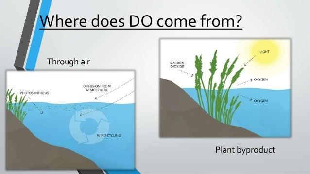 dissolved oxygen in water pdf