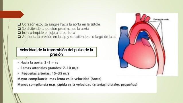 Tu tienes hipertensión renal ?