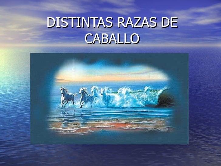 DISTINTAS RAZAS DE CABALLO