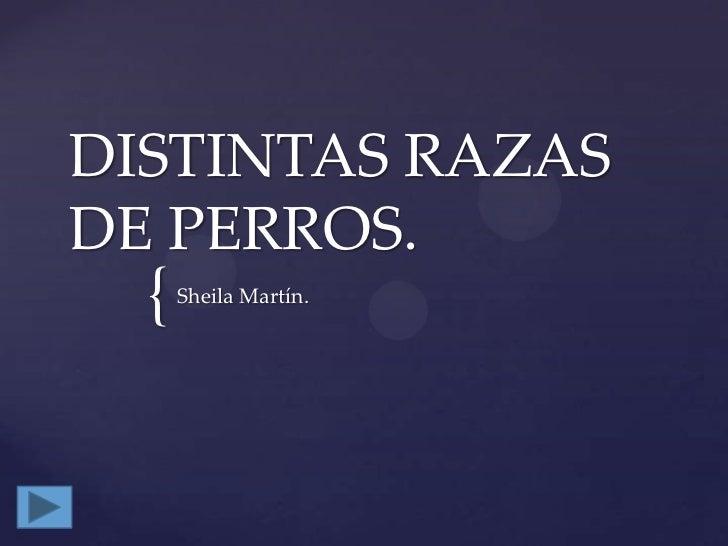 DISTINTAS RAZAS DE PERROS.<br />Sheila Martín.<br />