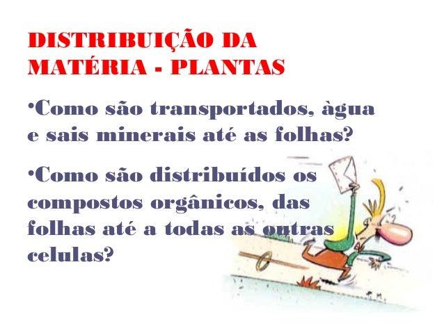 DISTRIBUIÇÃO DA MATÉRIA - PLANTAS •Como são transportados, àgua e sais minerais até as folhas? •Como são distribuídos os c...
