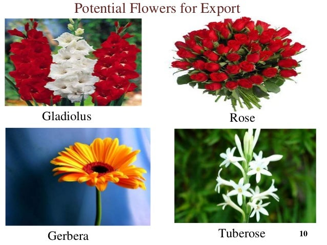 list of flowers exported from india