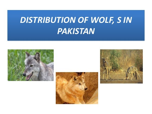 DISTRIBUTION OF WOLF, S IN        PAKISTAN