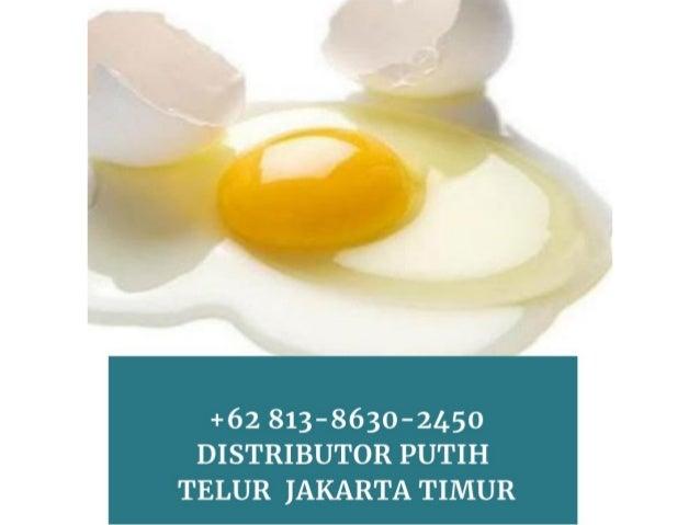 Ready Stok Wa 62 82219199897 Distributor Putih Telur