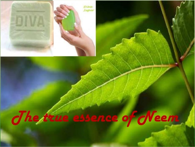 The true essence of Neem