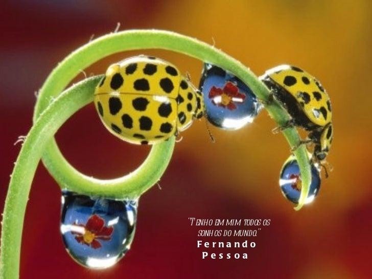 """""""Tenho em mim todos os sonhos do mundo."""" Fernando Pessoa"""