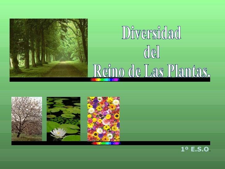 Diversidad  del  Reino de Las Plantas. 1º E.S.O .