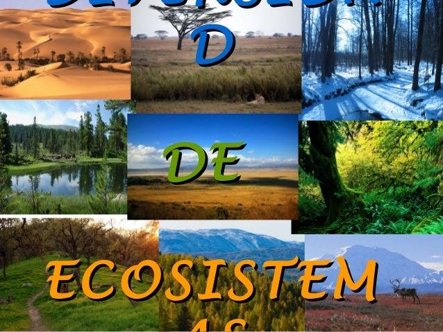 DIVERSIDA D DE ECOSISTEM