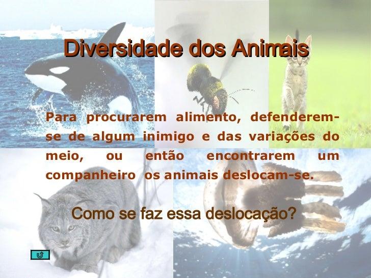 Diversidade dos Animais <ul><li>Para procurarem alimento, defenderem-se de algum inimigo e das variações do meio, ou então...