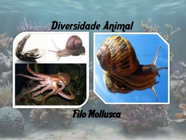 Diversidade Animal    Filo Mollusca