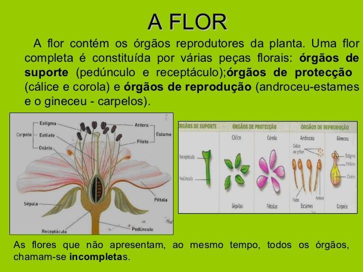 A FLOR <ul><li>A flor contém os órgãos reprodutores da planta. Uma flor completa é constituída por várias peças florais:  ...
