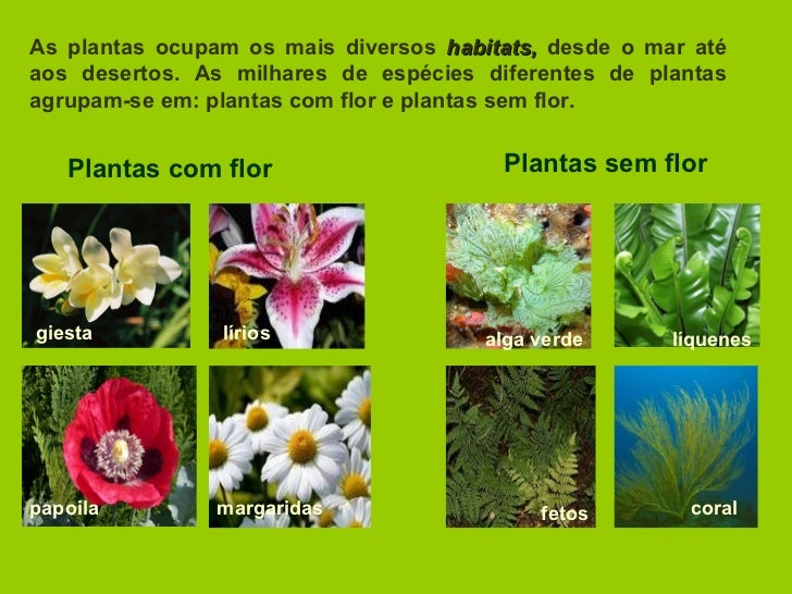 As plantas ocupam os mais diversos  habitats,  desde o mar até aos desertos. As milhares de espécies diferentes de plantas...