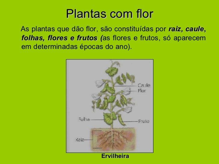 Plantas com flor <ul><li>As plantas que dão flor, são constituídas por  raiz,   caule ,  folhas, flores e frutos ( as flor...