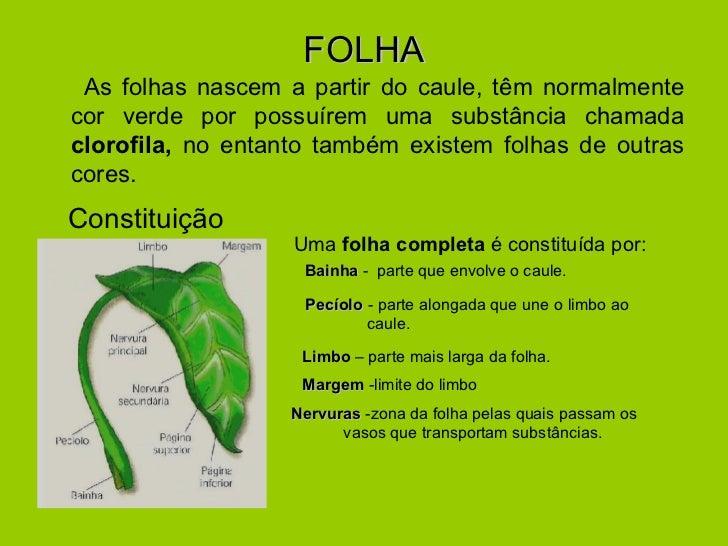 FOLHA <ul><li>As folhas nascem a partir do caule, têm normalmente cor verde por possuírem uma substância chamada  clorofil...