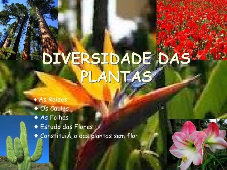 ♦  As Raízes  ♦  Os  Caules ♦  As Folhas ♦  Estudo das Flores ♦   Constituição das plantas sem flo r