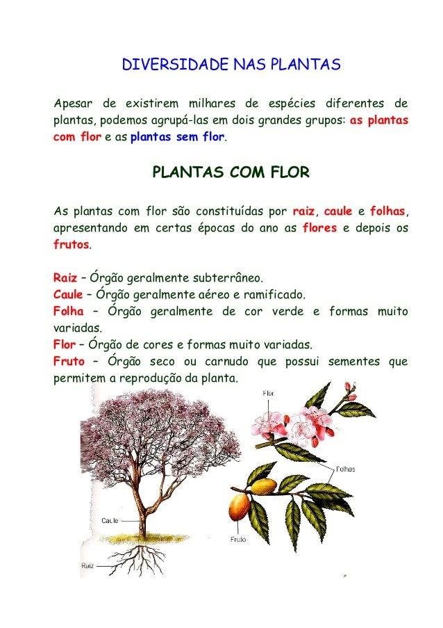 DIVERSIDADE NAS PLANTAS Apesar de existirem milhares de espécies diferentes de plantas, podemos agrupá-las em dois grandes...