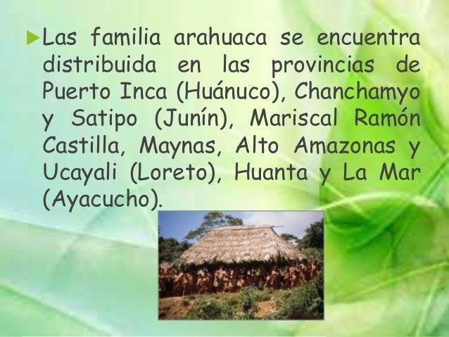 LENGUAS PANO:  Lengua Amahuaca: Ubicados en los ríos Sepahua, Curiuja, Alto Ucayali, Inuya, Purús, Mishagua.  Lengua Cap...