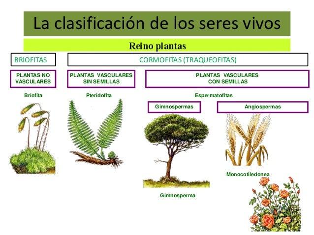 Diversidad y clasificación de los seres vivos