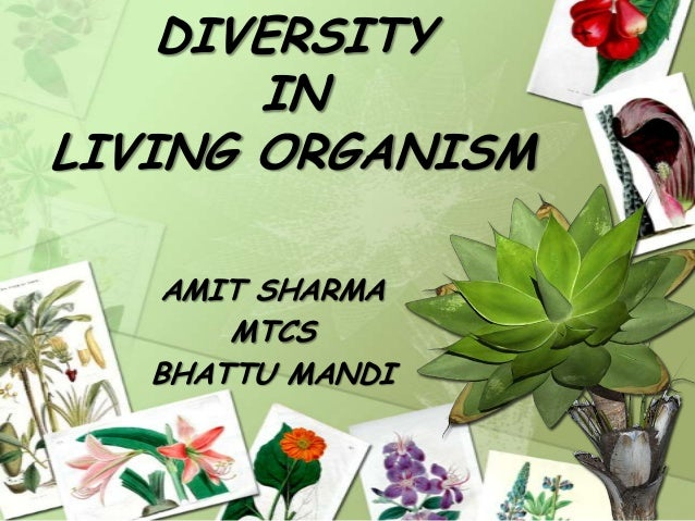 DIVERSITY IN LIVING ORGANISM AMIT SHARMA MTCS BHATTU MANDI